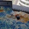 איך אפשר לעשות כסף מהבית – מדריך ליצירת הכנסות מהבית
